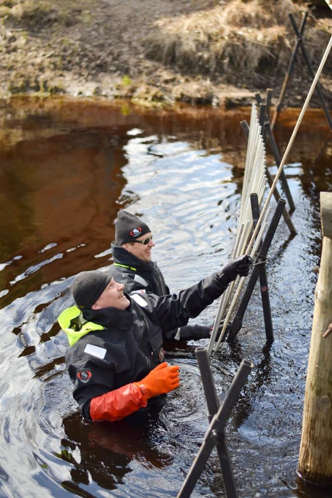 Kaksi miestä vedessä suorittamassa vesienhoidon toimenpidettä.
