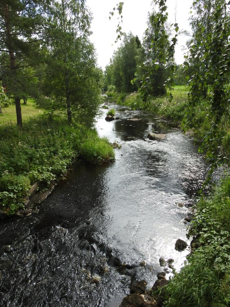 Kapeahko joki virtaa pellon laidassa puiden välistä.